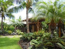 miami palm tree landscaping landscape tropical with travertine