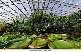 Botanical Gardens Oxford Oxford Botanic Garden Hothouse Stock Photos