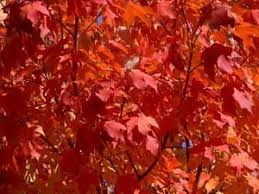 why leaves change color facts for