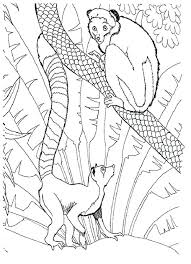 zoo coloring pages preschool zoo pictures to color zoo animals coloring pages color coloring