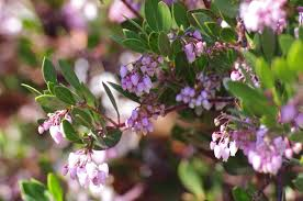Flower San Jose - drought tolerant plants for a san jose area native garden