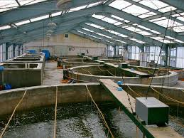 Backyard Fish Farming Tilapia Best 25 Shrimp Farming Ideas On Pinterest Tilapia Fish Farming