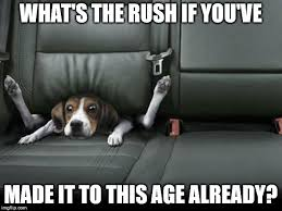 Happy Birthday Meme Dog - happy birthday meme birthday wishes greetings images