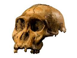 halloween skull transparent background 7 celebrity fossils that signify the evolutionary narrative of