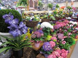 Home Design And Remodeling Show Discount Tickets 43rd Annual Central Ky Home U0026 Garden Show Show Technology