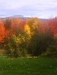 foliage drives nh