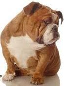 nettoyer pipi de chien sur canapé tache d excréments tout pratique