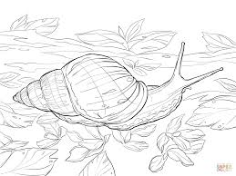 giant african land snail coloring page free printable coloring pages