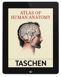 Principles Of Anatomy And Physiology Ebook Bourgery Atlas Of Human Anatomy And Surgery Taschen Books Ebook