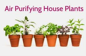 Best Plants For Bedroom Air Purifying House Plants To Get Rid Of Toxins Indoor Air