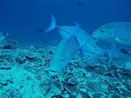 scubafish zanzibar dive center in zanzibar padi courses