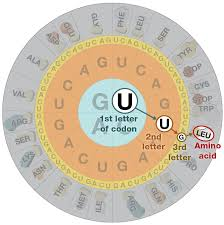 how do cells read genes