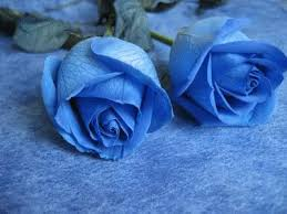 Blue Roses Blue Roses Comments And Graphics Codes For Friendster Myspace Orkut