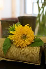 teddy sunflowers t is for teddy sunflowers design sponge