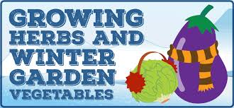 growing herbs and winter garden vegetables u2013 bentley seeds