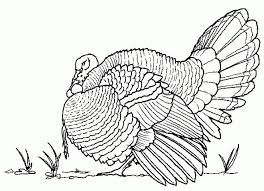 11 thanksgiving coloring pages images coloring