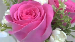 imagenes flores bellisimas los imperials una rosa bellas flores instrumental youtube