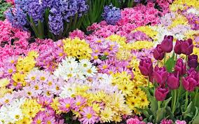 garden flowers live wallpaper android apps on google play