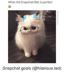 Purrrfect Meme - when the snapchat filter is purrfect cd snapchat goals funny meme