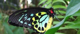 things to do kuranda australian butterfly sanctuary