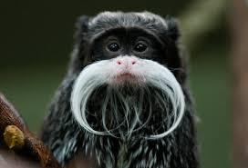 surprising animals that sport mustaches animal animal kingdom