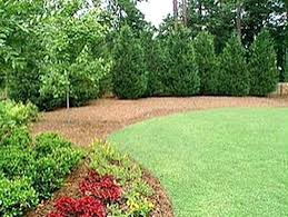 Landscaping Ideas For Backyard Privacy Trees For Privacy In Small Yard Screening Trees For Small Yards