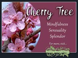 cherry tree meaning symbolism tree symbolism meanings