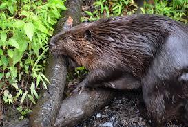 virginia living museum busy beavers 1