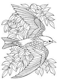 poinsettia coloring pages 40 bird coloring pages coloringstar