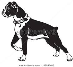 boxer dog howling dog boxer breed black and white vector picture isolated on white