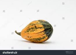 Mini Decorative Pumpkins Colorful Ornamental Pumpkins Gourds Isolated On Stock Photo