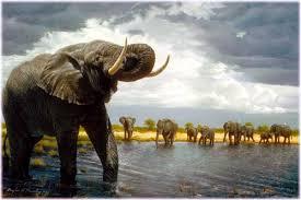 rv graphic mural elephant herd at waterhole 319075 maxx graphix