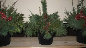 Outdoor Christmas Wreaths by Christmas Wreaths U0026 Decor Cd Trees