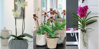 orchids care tips and tricks how to care for your orchid orchid garden