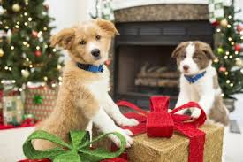 giving a pet as a gift how to make sure everyone wins petsmart