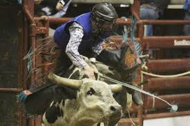 www gray tamworth bull rider bradie gray regains consciousness after being