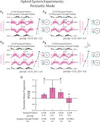 patterns of presynaptic activity and synaptic strength interact to