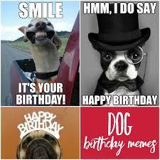 Birthday Meme Dog - the best birthday memes for everyone you know birthday memes