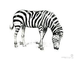 42 zebra coloring pages to save gianfreda net