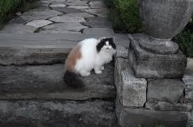 Barn Cat Names An Update On My Beautiful Cats The Martha Stewart Blog