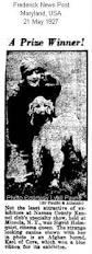 afghan hound racing uk afghan hound times library