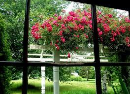 best climbing rose trellis design u2013 outdoor decorations