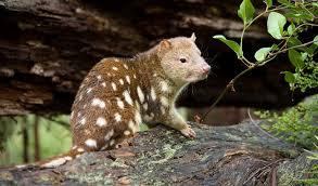 www new new england national park nsw national parks