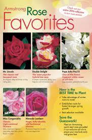 49 best roses images on pinterest flowers hybrid tea roses and