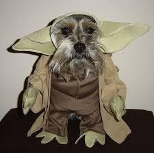 Manatee Halloween Costume 25 Yoda Dog Costume Ideas Pugs Dog Pirate