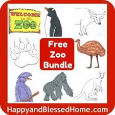 211 best z z as in zoo images on pinterest zoology wild animals