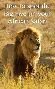 african safari animals the big five how to see them on your african safari the