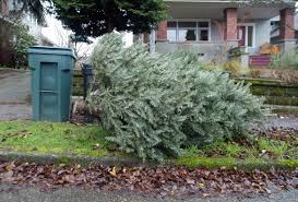 here u0027s where you can recycle your christmas tree the seattle times