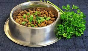 comment cuisiner du chien 15 astuces indispensables pour tous ceux qui ont un chien