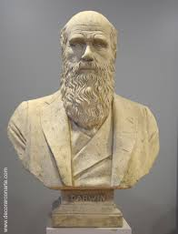 bust of charles darwin 71x53x29cm sale of sculptures